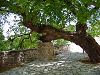 tree support aradippou tales a life in cyprus